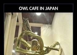 Enlace a En Japón hay un café temático para los locos de los búhos