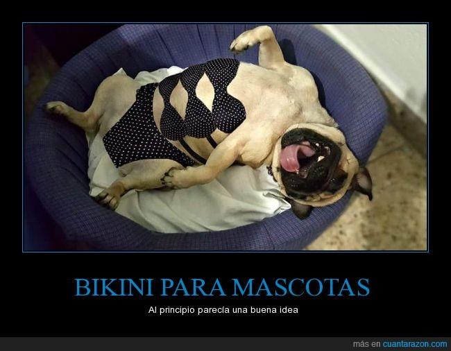 Bikini,mala idea,mascotas,perrita,perro,puka,top,traje de baño,verano