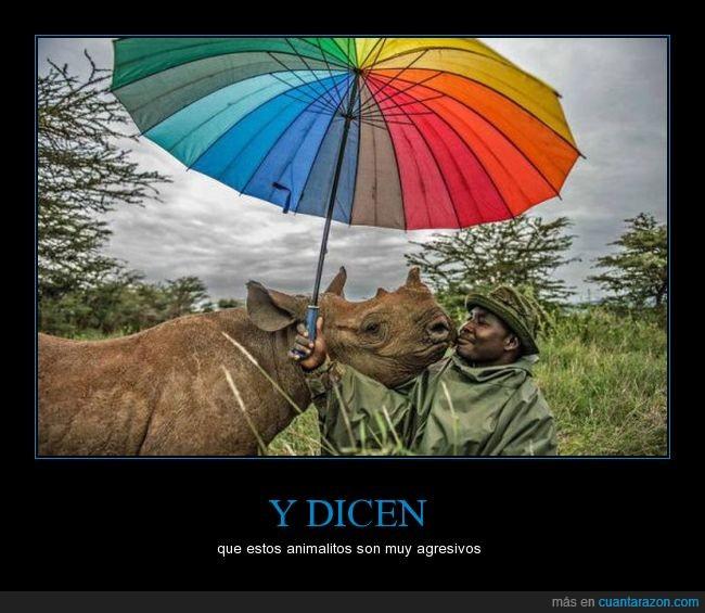 beso,paraguas,parasol,rinoceronte,sombrilla