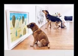 Enlace a PRIMER MUSEO PARA PERROS