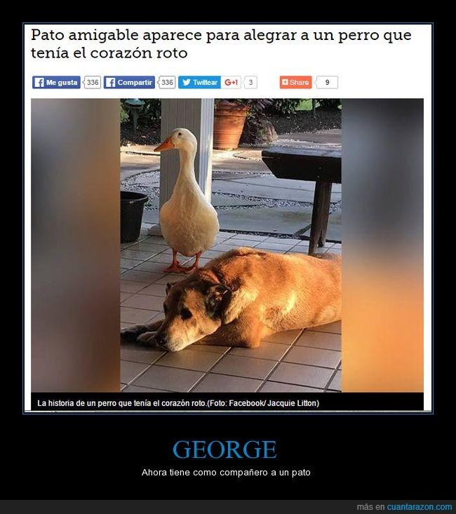 amigo,amistad,pato,perro