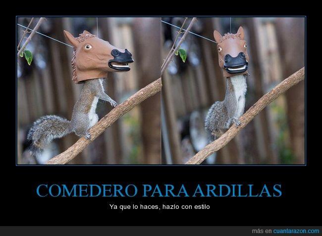 ardilla,caballo,cabeza,careta,comedero,mascara
