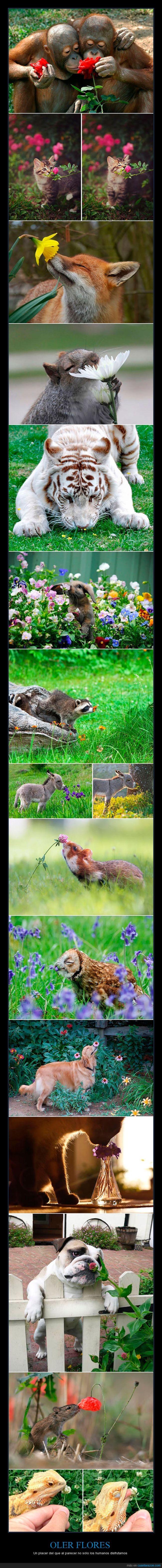 animal,flores,gato,mapache,oler,olfato,perro,raton,tigre