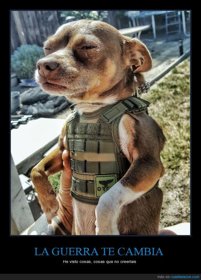chaleco,disfraz,guerra,mirada,perro,soldado