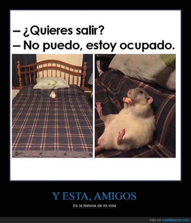 animal,casa,comer,comida,hamster,ocupado,rata,raton,salir