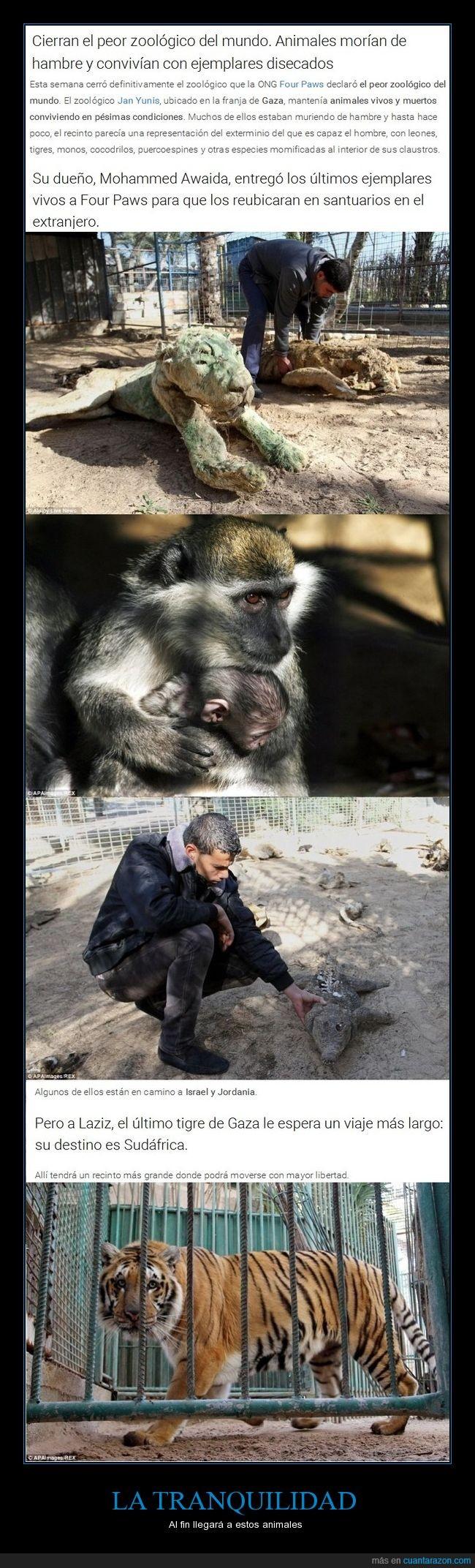 animal,cerrar,crueldad,terrible,zoológico