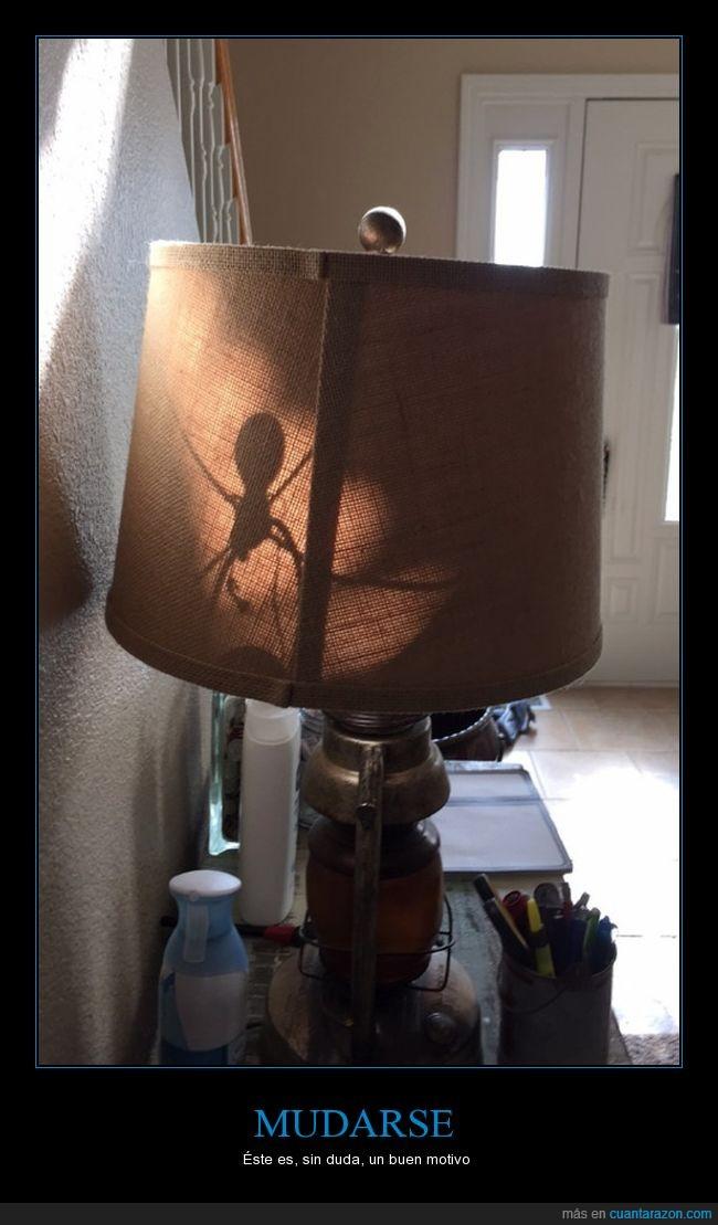 Araña,Lámpara,Muerte,Sombra