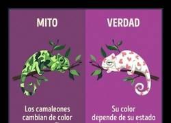 Enlace a 10 mitos sobre animales que no son verdad