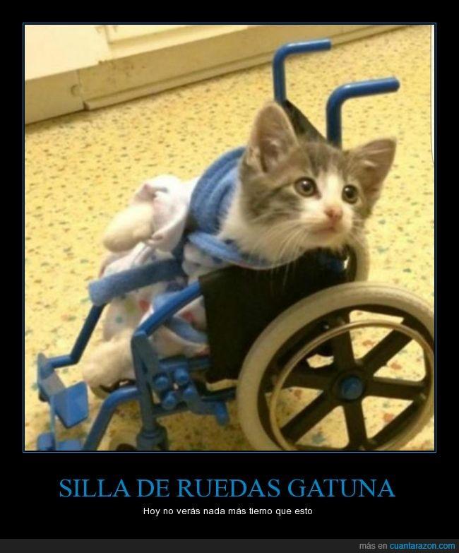 Gatito,Lleva un Albornoz,Silla de ruedas