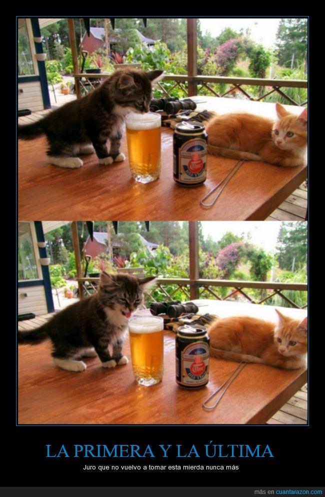 amarga,cerveza,gato,mal gusto
