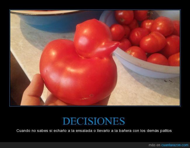 decisión,pato,tomate,wtf