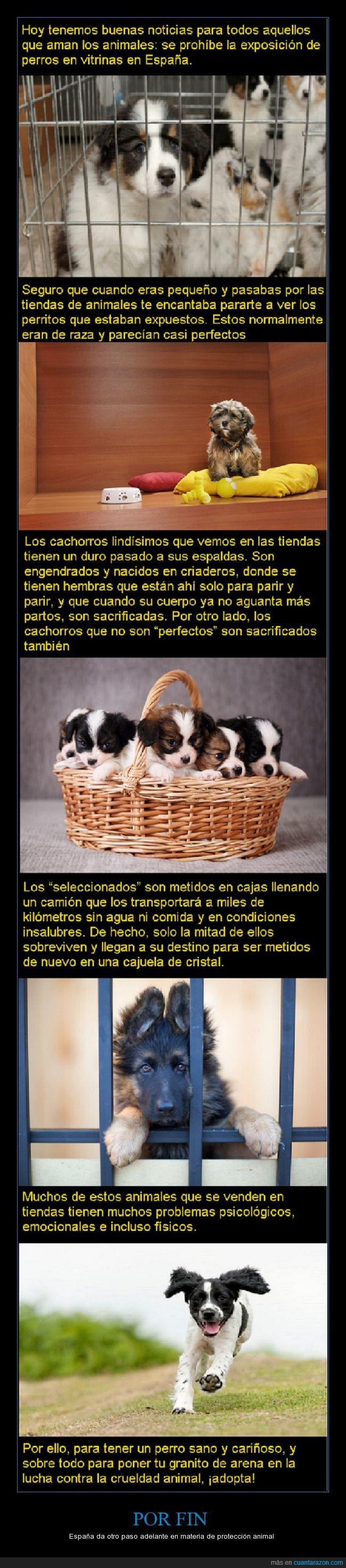 adopta,cachorros,gatos,no compres,perritos,tiendas de animales,vitrinas