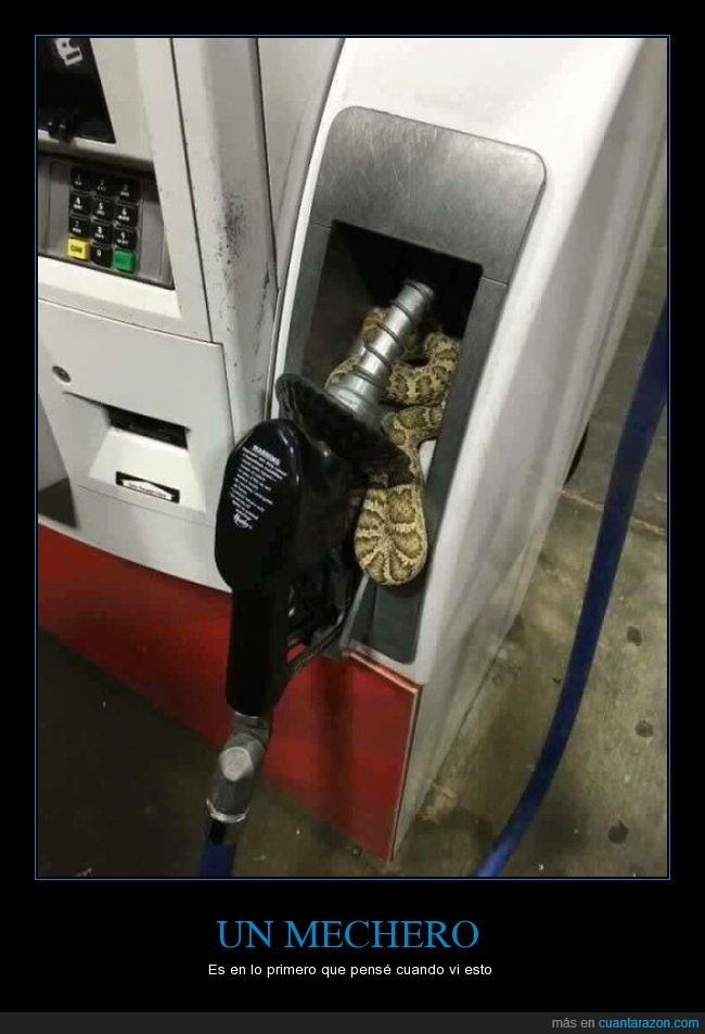 bomba,gasolina,pitón,serpiente,vívora