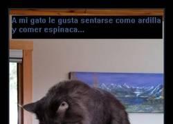 Enlace a El gato ardilla
