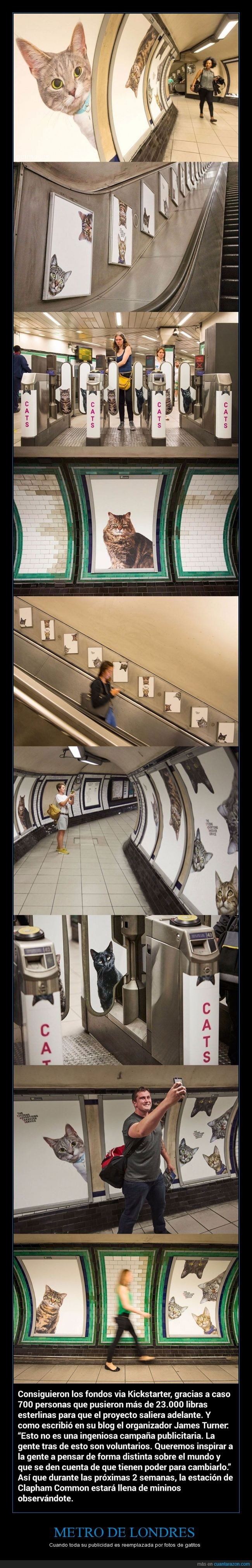 gato,gatos,london,londres,metro,the tube