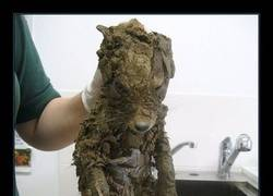 Enlace a No se pudo identificar a este misterioso animal cubierto de barro hasta que lo limpiaron