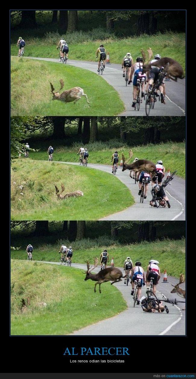 bicicleta,carrera,cervatillo