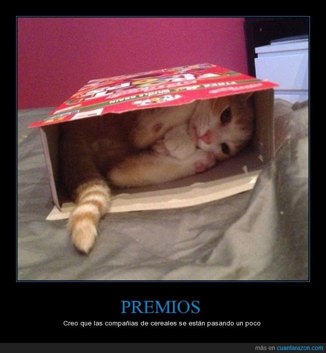 caja,cereales,compañias,gato,premios