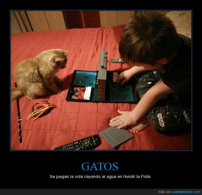 battleship,chiste malo,gato,niño