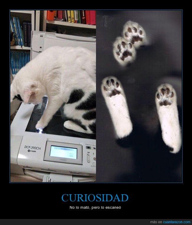 curiosidad,escaner,gato,patas