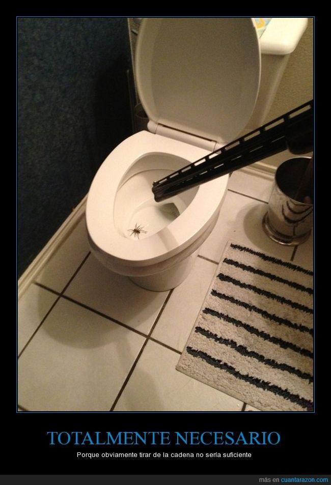 araña,baño,inodoro,váter.escopeta