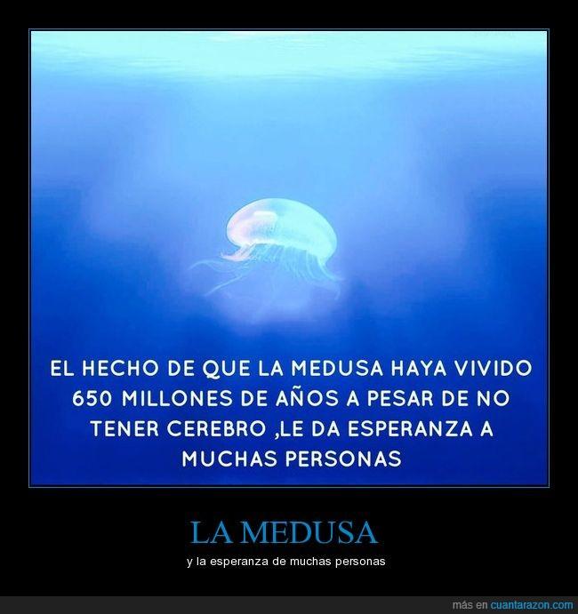 Image result for la medusa sobrevivio