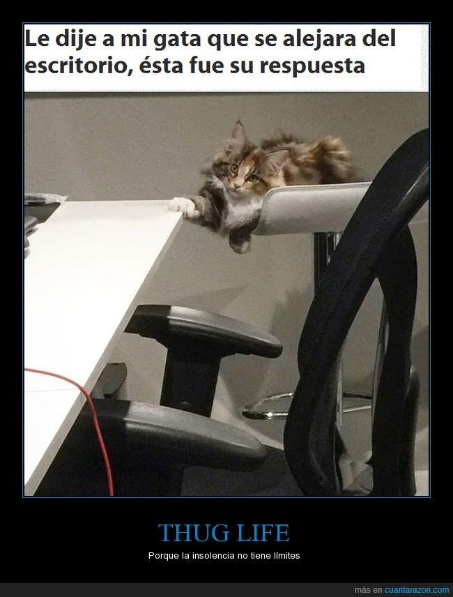 escritorio,gata,insolencia,thug life