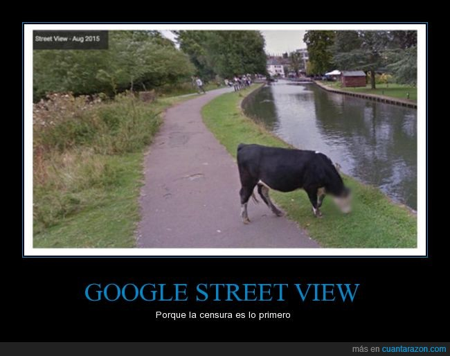 cara,censura,chrome,earth,google,street view,vaca,wtf