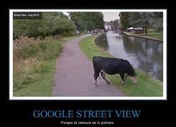 Enlace a Google preocupándose por la privacidad de las vacas