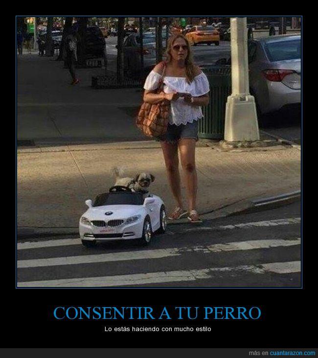 bmw,chcia,coche,conttrol,estilo,perro