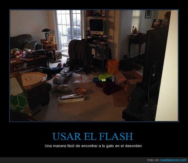 camara,cuarto,desorden,encontrar,flash,gato