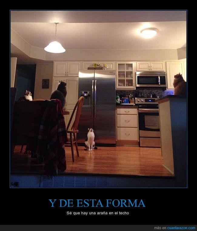 araña,cocina,gatos,techo