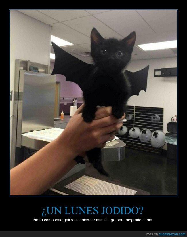 alas,batcat,catbat,gatito,gato,murciélago,negro