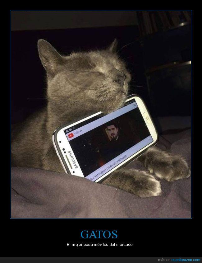 gato,movil,sostener,telefono