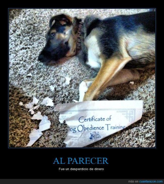 can,certificado,perro