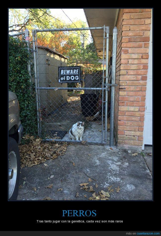 gato,letrero,perros,warning,wat