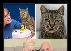 Enlace a El gato más viejo del mundo cumple 31 años y aún le quedan muchas vidas
