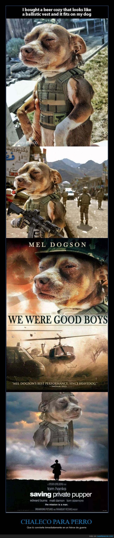 chaleco antibalas,perro