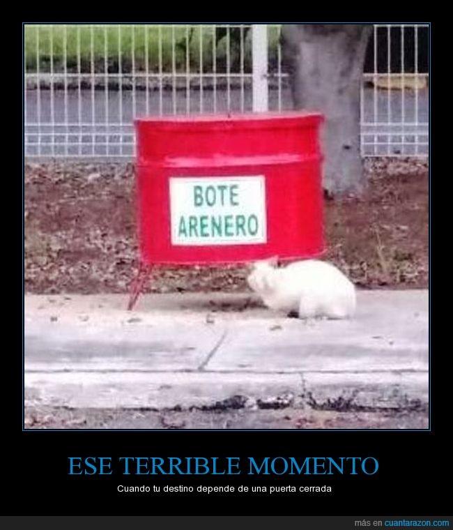 Emergencia,Gato,Terror