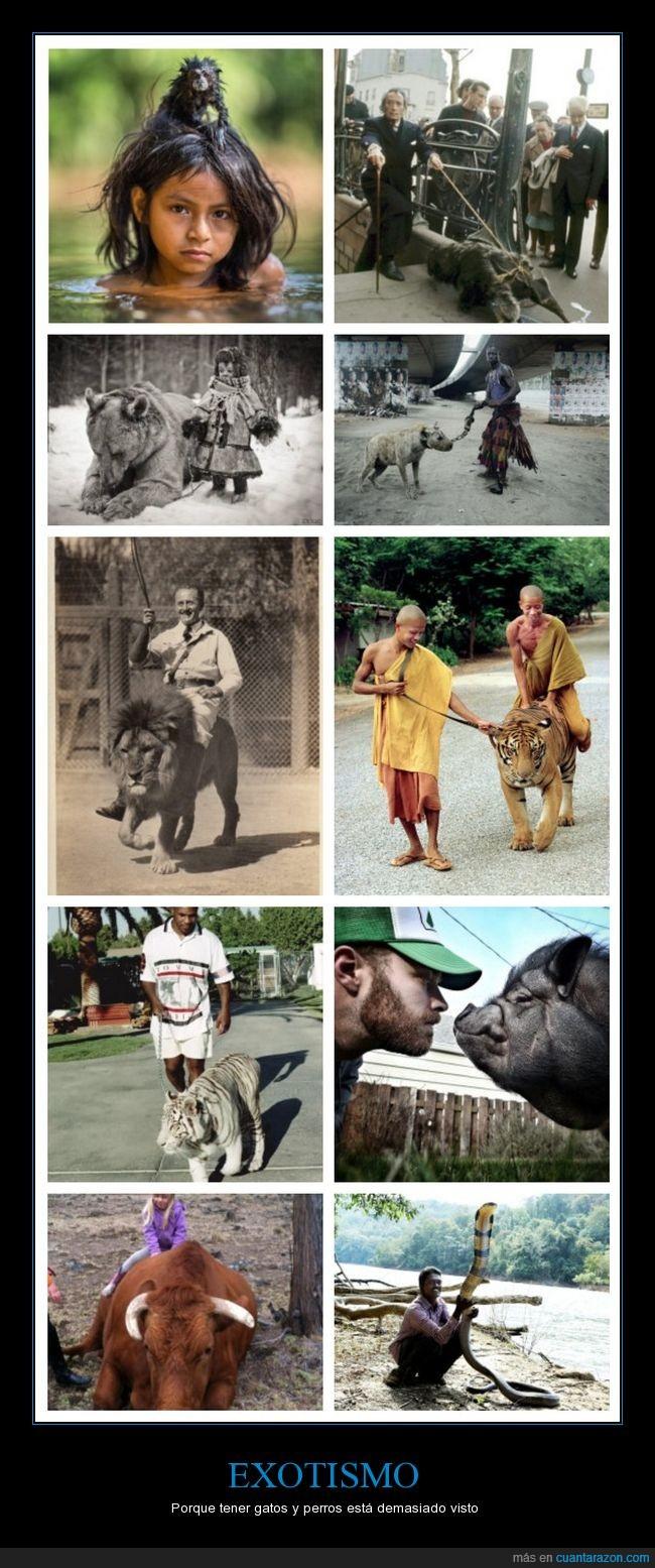 animales,hienas,leones,mascotas,tigres