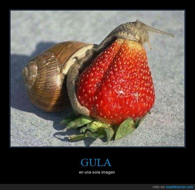 caracol,comer,fresa,tamaño