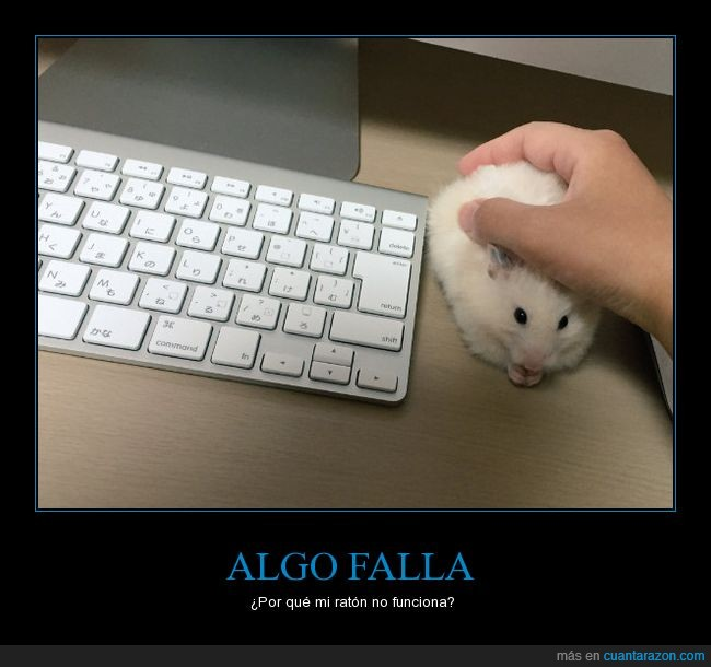 hamsters,lindo,mouse,pc,raton