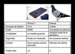 Enlace a La comparativa definitiva entre una paloma y el iPhone 7