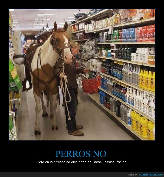 caballos,comprar,tienda
