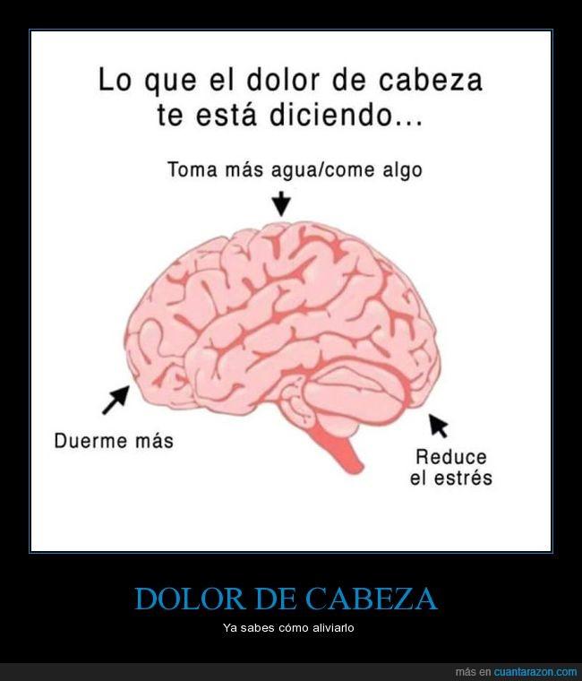 cabeza,cerebro,dolor