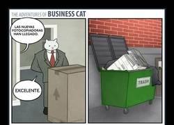 Enlace a Los gatos y las cajas, siempre las cajas
