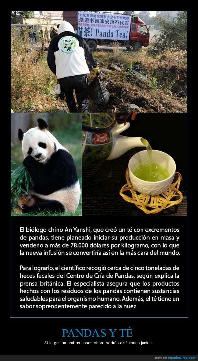 caca,caro,chino,excremento,panda,té