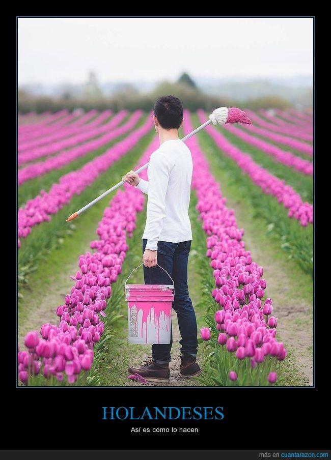 flores,Holanda,tulipanes