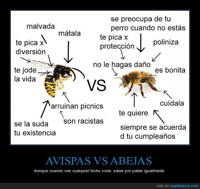 abejas,avispas