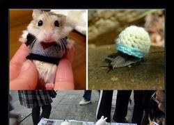 Enlace a 20 animalillos en jerseis de lana minúsculos que te harán derretir